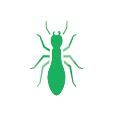 hormiga quijote el hidalgo control de plagas fumigaciones