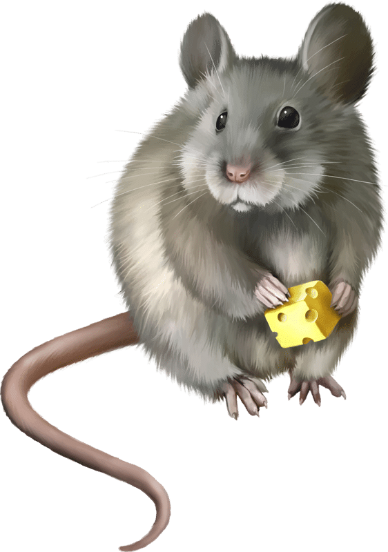 ratón fumigaciones control de plagas desratización quijote el hidalgo