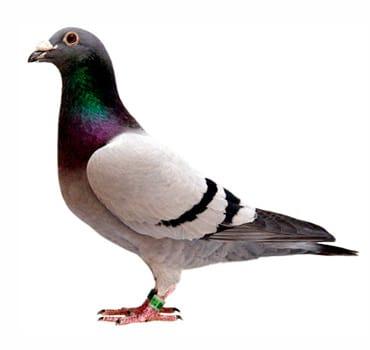 control de aves quijote el hidalgo