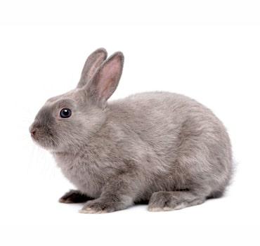 control de conejos quijote el hidalgo
